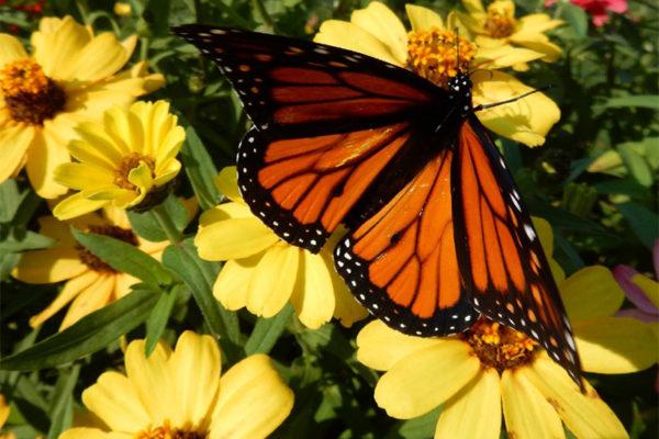 2019 Annual Calendar monarch