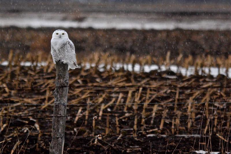 2019 Annual Calendar owl