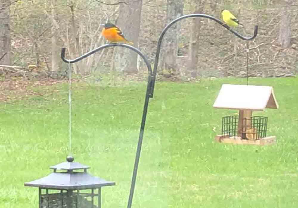 Bird Quest