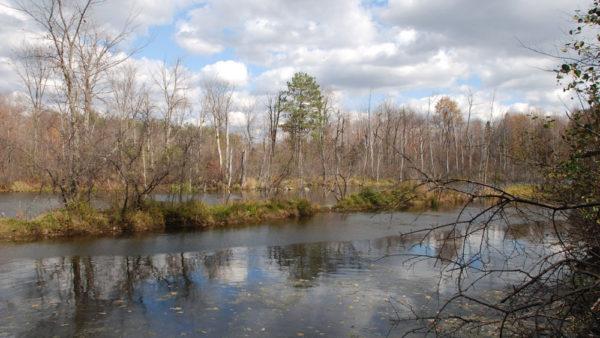 Bird Club Pond