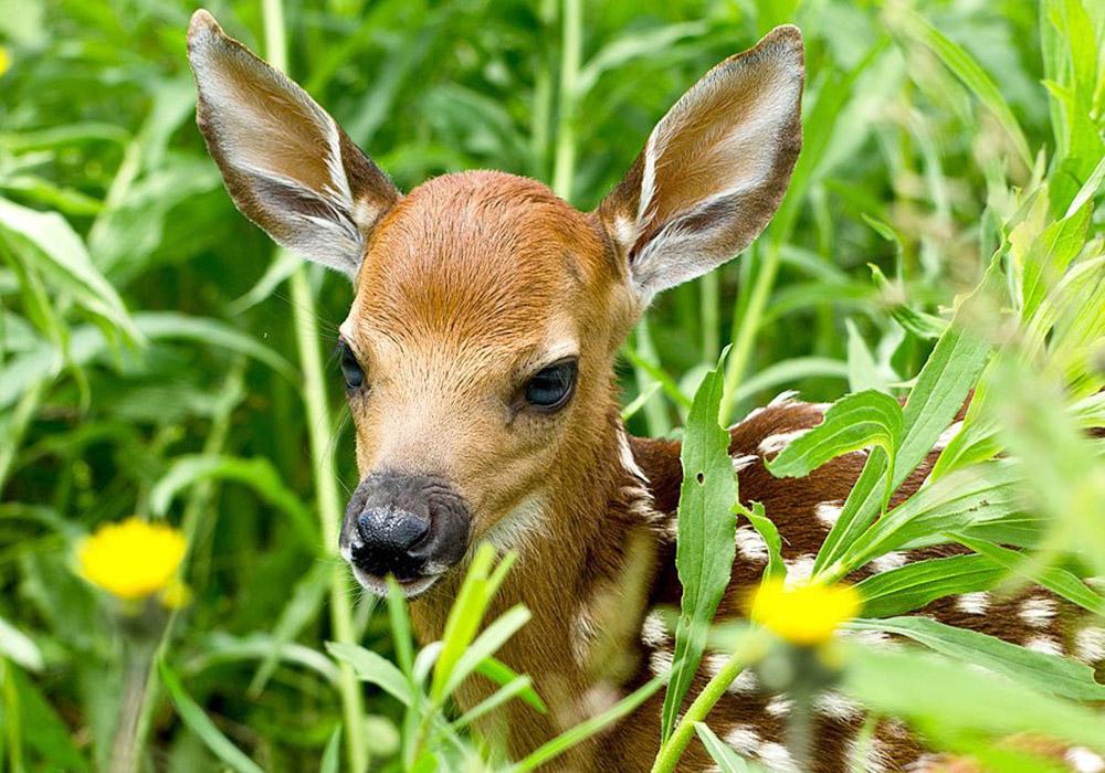 Deer Pamela Underhill Karaz