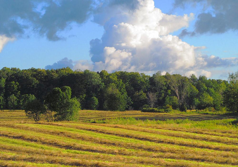 Farm Fredrick Brand Town of Worth