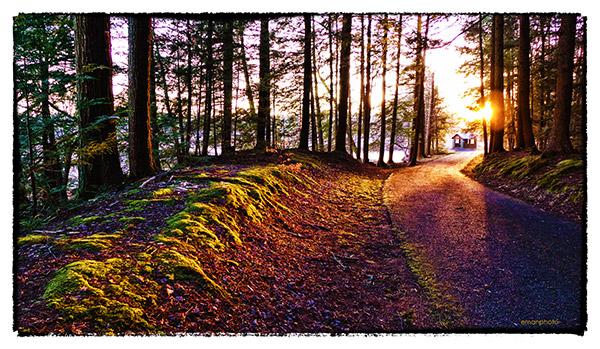 Forest Park Aglow Emmanuel Vaucher
