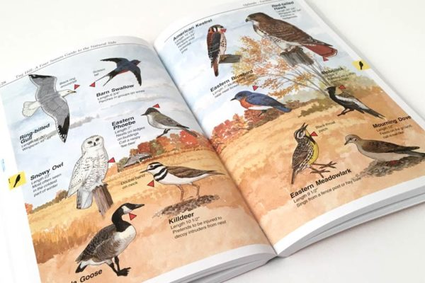 Four Season Guide birds