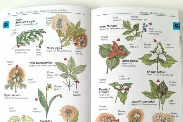 Four Season Guide flora
