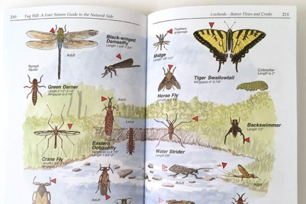 Four Season Guide insects