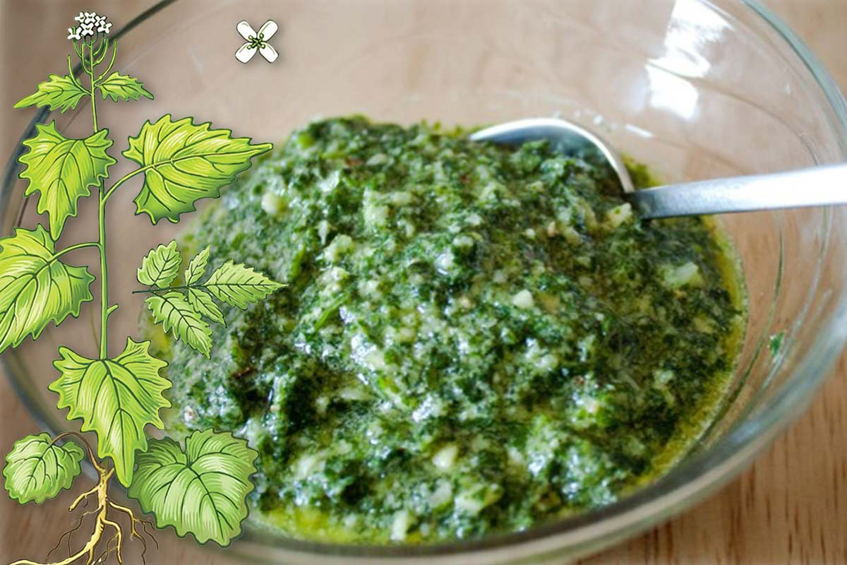 Garlic Mustard Weed Pesto