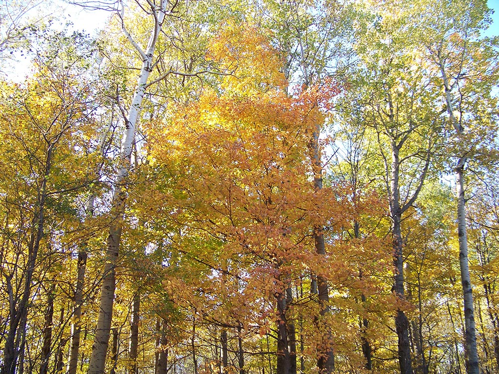 Joseph Blake Wildlife Sanctuary fall trees