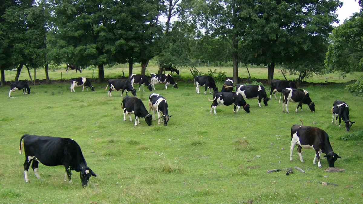 Meek Farm