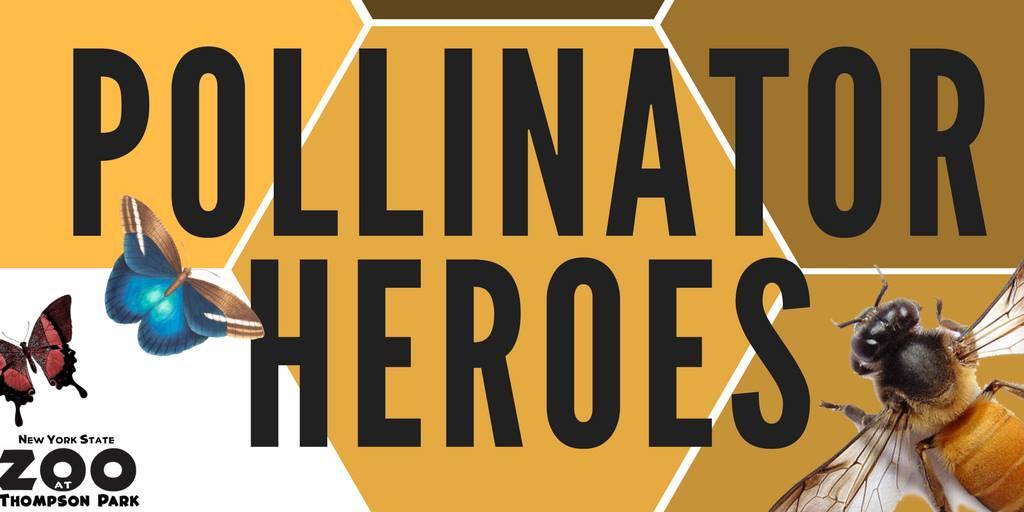 Pollinator Heroes Zoo