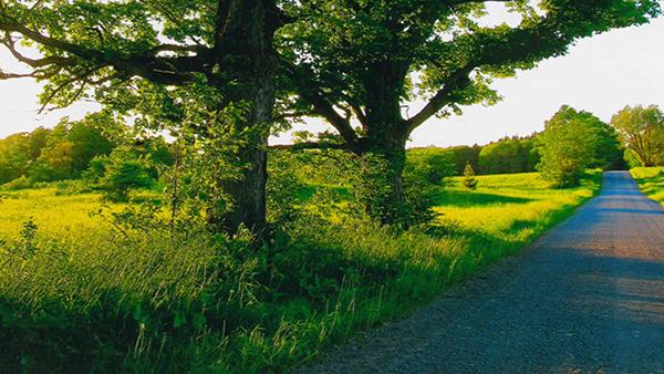 Trees along roadside