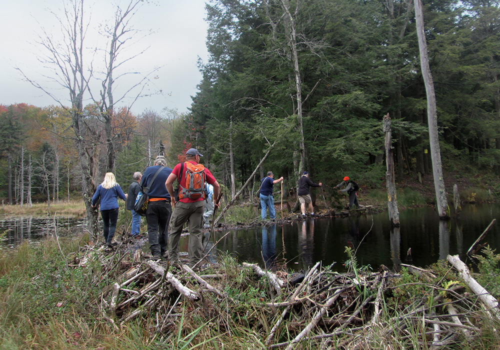 group enjoys peaceful walk around pond and wetlands