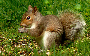 Wayne Lamica Squirrel Amboy Center