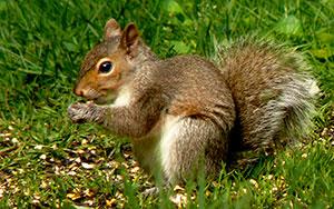 Wayne Lamica Squirrel Amboy Center