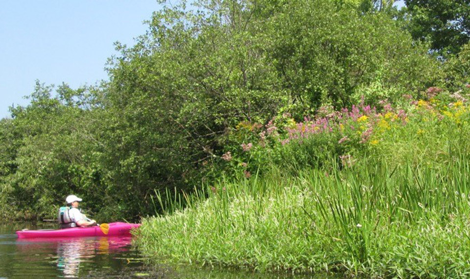 Westdale Paddle Janet Thompson