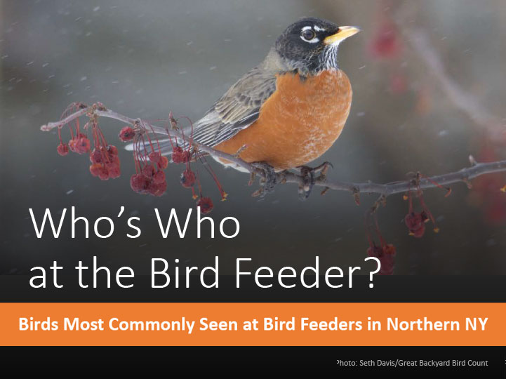 Who's Who at the Bird Feeder