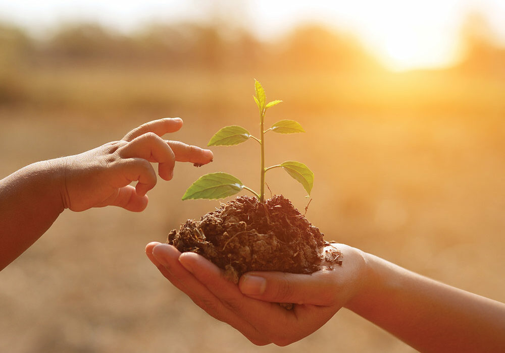 an adult holding a seedling with a child touching it