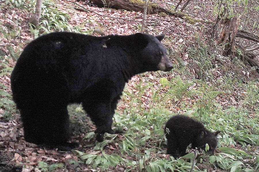 photo taken by black bears