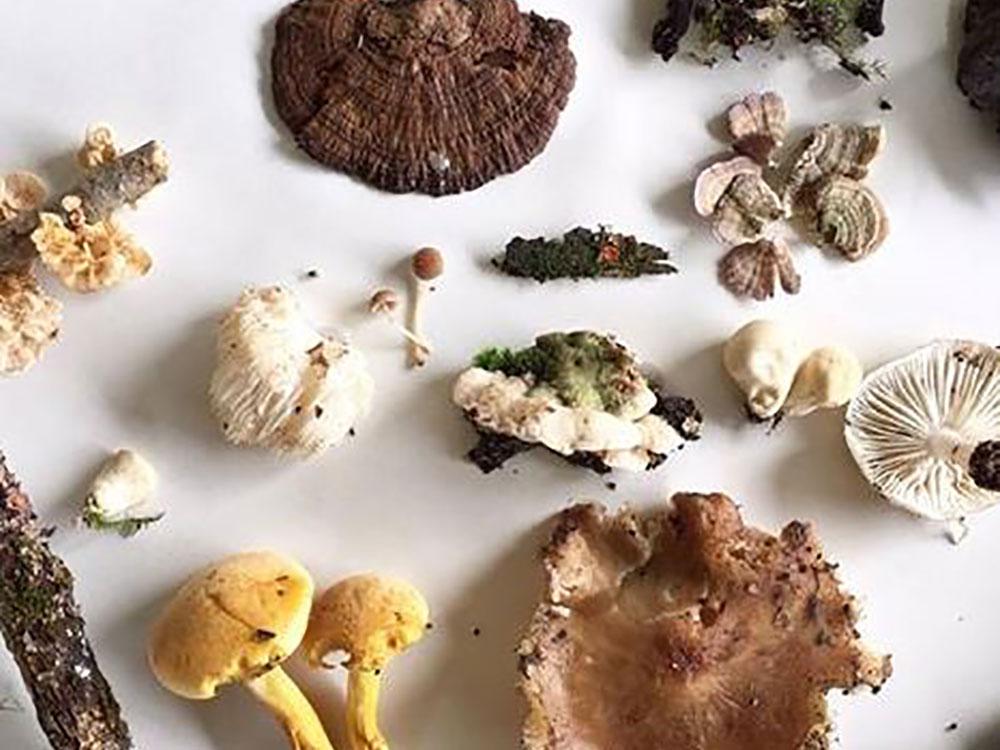 mushroom hike by Haleigh Rose