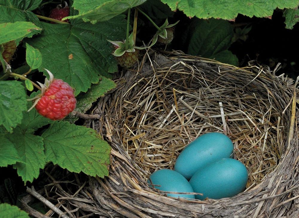 Robyn's nest symbolizing growth